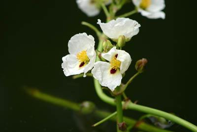 soin énergie du printemps, photo fleurs capmediation